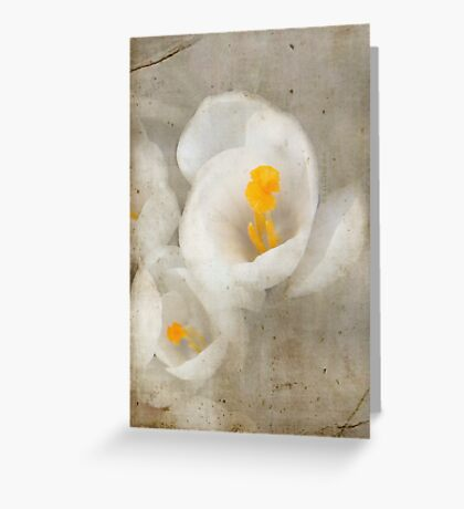 Faded White Greeting Card
