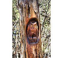 Hoot Tree Photographic Print