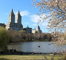 Central Park NYC by pieperview