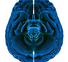 Brain by Atanas Bozhikov