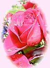 Raindrops and Rosebud by MotherNature
