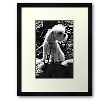 Mickey (Miniature Poodle) Framed Print