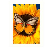 Butterfly On Sunflower Art Print