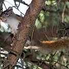 Squirrel Playfulness by vette