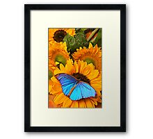 Blue Butterfly On Sunflower Framed Print