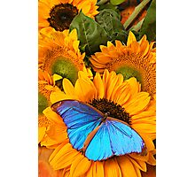 Blue Butterfly On Sunflower Photographic Print