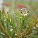 Flaming Drop-Illusion of a flame within raindrop. by Sherilee Evelyn