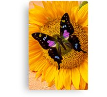 Purple Butterfly On Sunflower Canvas Print