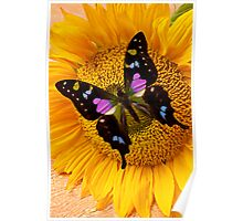 Purple Butterfly On Sunflower Poster