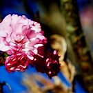 Cherry Blossom Time by Kay  G Larsen