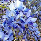 Wisteria Blooms by WeeZie