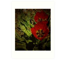 Turn'o the century Tulips Art Print