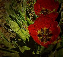 Turn'o the century Tulips by Sharksladie
