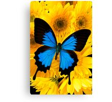 Blue Butterfly On Yellow Mums Canvas Print