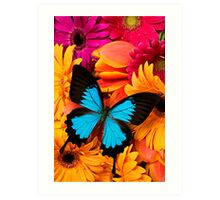 Blue Butterfly On Colorful Daisy's Art Print