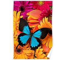 Blue Butterfly On Colorful Daisy's Poster