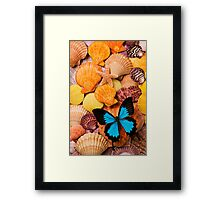 Blue Butterfly And Sea Shells Framed Print