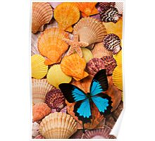 Blue Butterfly And Sea Shells Poster