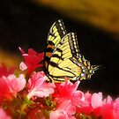 My First Butterfly of Spring :) by Stephanie Reynolds