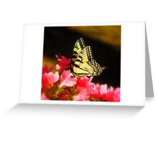 My First Butterfly of Spring :) Greeting Card