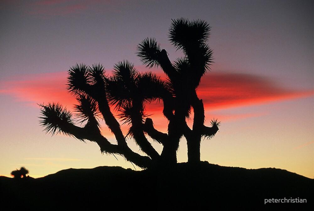 Joshua Tree sunset by peterchristian