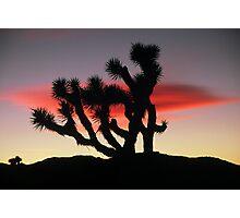 Joshua Tree sunset Photographic Print