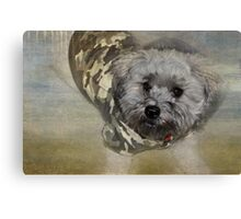 Adventure Pup Canvas Print