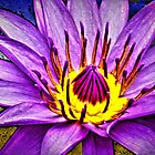 Water Lily  by Ron Fitzgerald