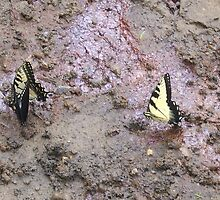 Three Swallowtail Butterflies  by AngelaHRey