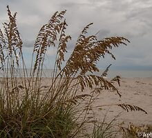 Paradise Beyond the Sea Oats  by John  Kapusta