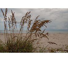 Paradise Beyond the Sea Oats  Photographic Print