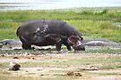 Hippopotamus, Kenya by Carole-Anne