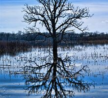 THE FLOODED OAK by pshootermike