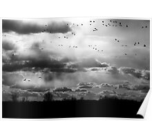 Migration Rays Poster