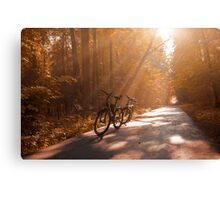 Morning Autumn Forest Canvas Print