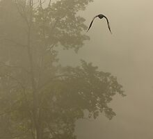 Misty Raven by sprucedimages