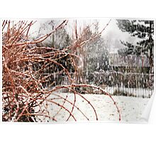 Snowy Shrubbery  Poster