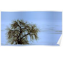 Lone Willow on a Frozen Shoreline Poster