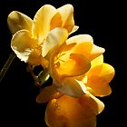 Freesia Sunshine - Burst of Yellow Freesias by Brian Thedell