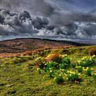 Springtime on the moors  by Rob Hawkins