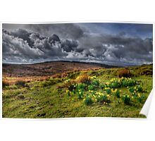 Springtime on the moors  Poster