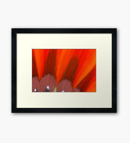 Floral Marvel Framed Print