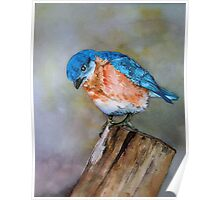 Blue Bird - Looking to Spring Poster