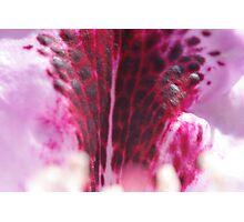 Flower Fountain Photographic Print