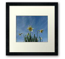 Daffodils 2 Framed Print