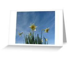 Daffodils 2 Greeting Card