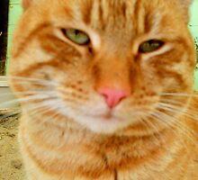 Ginger Now by BingoStar