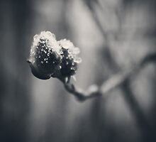 Spring Droplets by thren0dy