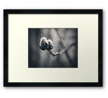 Spring Droplets Framed Print