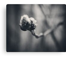 Spring Droplets Canvas Print
